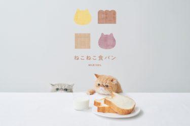 東京ねこねこの「ねこねこジャムパン」東京駅期間限定はいつまで?東京駅限定の値段や種類は?